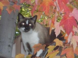 Boo Kitty enjoying a nice autumn day