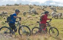 sheepbikes