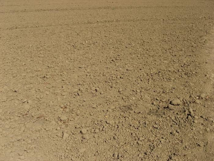 Photo from http://www.deviantart.com/art/Dirt-66511077