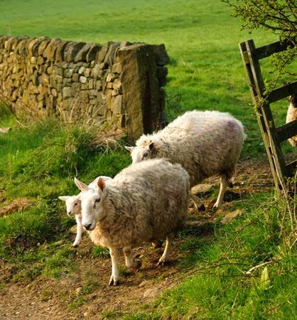 sheepgate.jpg
